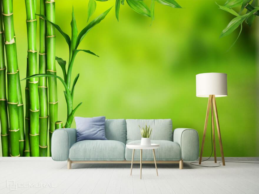 Bamboo photo wallpaper