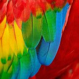Colourful Rainbow Parrot