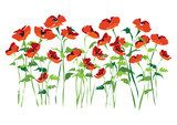 A field poppy counting rhyme