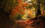 Autumn scenery of redness