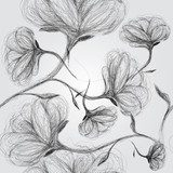A sketch of black and white flowers