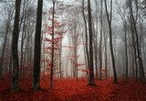 Autumn quietness - mysterious forest