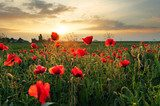 Poppy memory of love