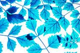 In the blue concepts of leaves