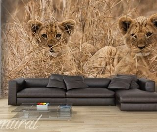 a purrrrrrr of happiness living room wallpaper mural photo wallpapers demural