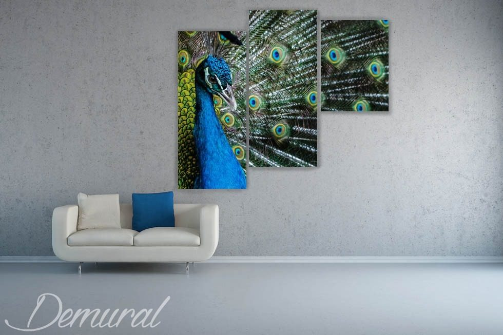 A peacock's eye Canvas prints Animals Canvas prints Demural