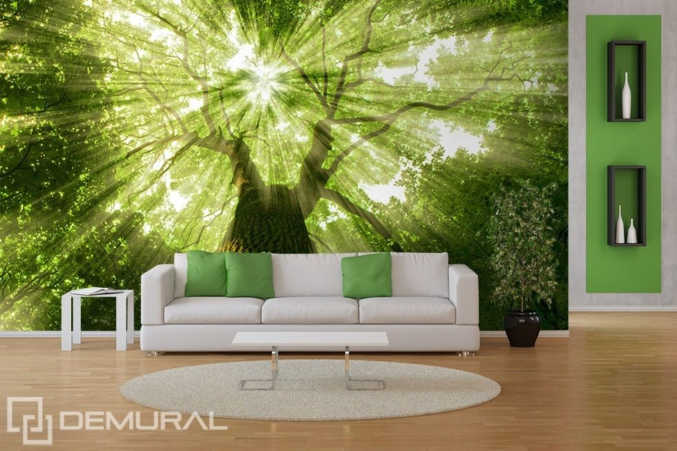 Wallpaper Sunbeams in the woods Wall Mural Forest Happywall