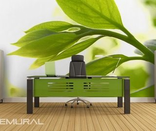 plants freshness office wallpaper mural photo wallpapers demural